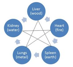 CHINESE MEDICINE BRISTOL: The organs in Traditional Chinese Medicine: The Liver