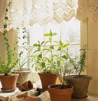 grow herbs indoors pic