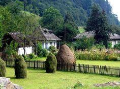 Bucovina, Romania Country, Plants, Beauty, Bulgaria, Romania, Rural Area, Country Music, Plant, Beauty Illustration
