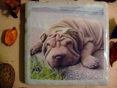 Shar Pei Coaster by TheCoasterMan on Etsy, $8.00