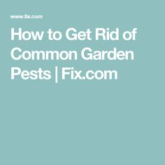 How to Get Rid of Common Garden Pests | Fix.com