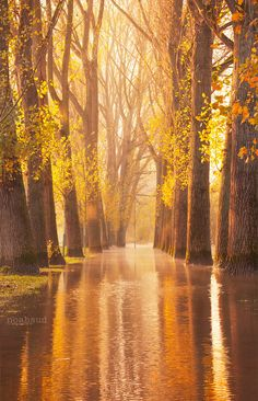 ~~Waltzing Wood ~ autumn, Cologne, Germany by noahsud~~