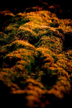 Mossy Hills © Loriental Photography - Prints available for sale in my European and US online shops (Europe : http://www.artflakes.com/en/shop/loriental-photography - USA : http://fineartamerica.com/profiles/loriental-photography.html)