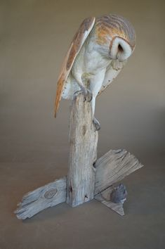 Richard Finch/carved from wood---incredible! Owl Art, Bird Art, Carved Wooden Birds, Dremel Wood Carving, Bird Statues, Ceramic Animals, Fauna, Wood Sculpture, Woodcarving
