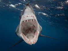 Sharp focus: Hungry shark tries to chomp photographer's camera (Sam Cahir / Barcroft Media via Landov)