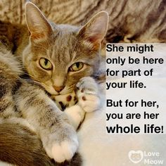 Cat Quotes, Animal Quotes, Raining Cats And Dogs, Rainbow Bridge, Crazy Cats, Cat Love, Cute Cats, Dog Cat, Kitty