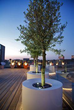 Olive in modern pot on rooftop garden