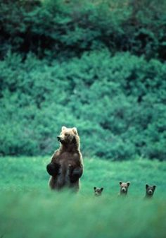And this little bears, is how we look around