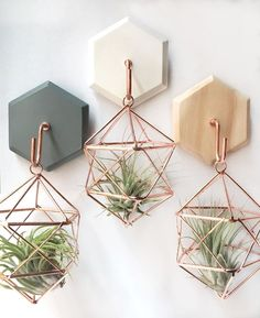 41 Creative Hanging Air Plants Decor Ideas – Best Home Plants Wall Mounted Plant Holder, Hanging Plant Wall, Diy Hanging, Hanging Plants Outdoor, Indoor Plants, Air Plant Display, Plant Decor, Idee Diy, Decorate Your Room
