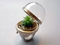 Terrarium ring.  So cool!