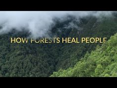 'HOW FORESTS HEAL PEOPLE'  Learn how forests have the ability to heal people. Please share and help spread some healing. For more info visit: www.healingforest.org via @topupyourtrip