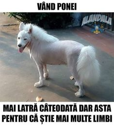 Destept ponei. Stupid Funny Memes, Funny Texts, The Funny, Funny Dogs, Memes Humor, Fart Humor, Super Funny, Really Funny, Animals And Pets