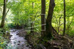 Bachlauf im sommerlichen Wald -  auf http://ronni-shop.fineartprint.de