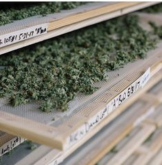$800 available in stock Weed Shop, Buy Weed Online, Hemp Oil, Bud, How To Dry Basil, Cannabis, Seeds, Ganja, Gem
