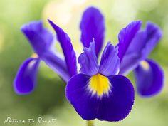 Blumenbild nach Wunsch: Das Glück wohnt überall.