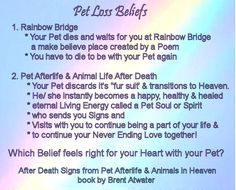 34 Best Dog Loss Quotes Cat Loss Quotes From Pet Spirits Animal