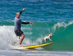 (Jack Russells are also amazing surfers. But that's another story.)