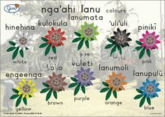 Colours Poster Tongan from Play'n'Learn - Buy Online Tongan Culture, Friendly Islands, Poster Colour, 4 Kids, Early Childhood, Languages, Teaching Resources, Blood, Colours