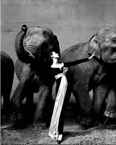 elephants and black and white dress?!