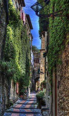 Ivy walls, Liguria, Italy