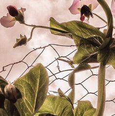 WABI SABI Scandinavia - Design, Art and DIY.: Welcome to my garden  http://wabisabi-style.blogspot.com/2014/06/welcome-to-my-garden.html
