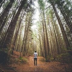 Where are you getting lost this weekend? shared this beautiful 📷 from the forests of Strahan in where the trees and the wilderness are commanding - with their size, stillness and wonder.🌲 We think Friday was made for adventures like this, don't you? Grow Taller Exercises, Height Growth, How To Grow Taller, 10 Year Anniversary, Travelogue, Tasmania, North West, West Coast, 10 Years