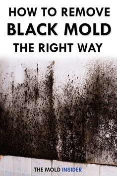 How To Get Rid of Black Mold: Black mold can be an insidious problem for homeowners, potentially leading to a costly removal process and even a host of health problems. But by learning how to get rid Cleaning Mold, Bathroom Cleaning Hacks, Household Cleaning Tips, House Cleaning Tips, Diy Cleaning Products, Kill Black Mold, Clean Black Mold, Remove Black Mold, How To Remove