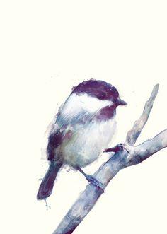 Bird illustration by Amy Hamilton