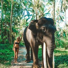 Elephant sanctuary in Bali. Elephant sanctuary in Bali Photo by Places To Travel, Places To See, Travel Destinations, Africa Destinations, Bali Travel Guide, Asia Travel, Thailand Travel, Wanderlust Travel, Thailand Vacation