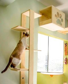 Cat Care Keeping Your Cat Healthy and Your Home Clean