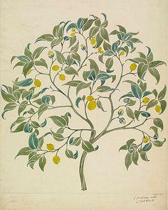 lemon tree tattoo - Google zoeken