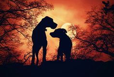 silhouettes by LBH photography - Pixdaus