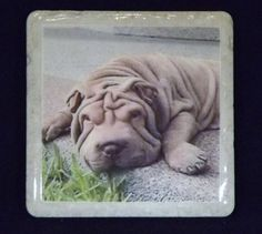 Shar Pei Coaster by TheCoasterMan on Etsy, $8.00  I like that you can customize these.