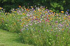 Blumenwiese anlegen: Tipps für einen blühenden Garten Wild Flower Meadow, Wild Flowers, Landscaping With Rocks, Garden Landscaping, Hydrangea Care, Design Jardin, Garden Design Plans, Types Of Fish, Plantation