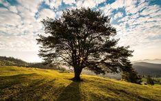 Speciale urnen maken het mogelijk dat er uit je as een boom groeit.