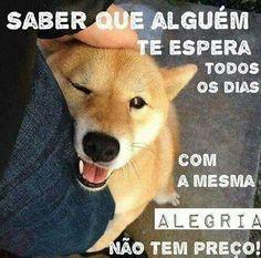 NÃO TEM MESMO! ❤❤❤ #amocachorro  #cachorroétudodebom  #cachorro  #petmeupet  #gato  #luludapomerania  #golden  #labrador  #pug  #maltes  #schnauzer  #bulldog  #viralata  #amoanimais