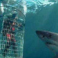 Cage dive with sharks. Omg this would be amazing!!!!