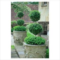 Gardening With Containers Art Topiaire ♥ Inspirations, Idées Topiary Garden, Garden Urns, Boxwood Topiary, Indoor Gardening Supplies, Container Gardening, Gardening Tips, White Gardens, Small Gardens, Formal Gardens