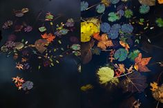 dietlind wolf, colorful leaves and cold black water