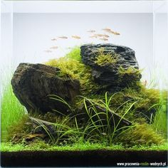 Aquatic Eden - Aquascaping Aquarium Blog-Amazing!