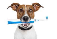 BONDE DA BARDOT: Saiba como evitar a gengivites em cães