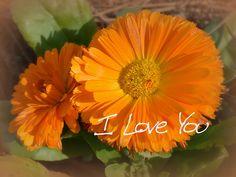 Fall in Savannah I found these beautiful orange blooms.