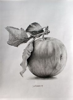 52 Fruit And Vegetable Drawing Ideas - Art Apple Sketch, Fruit Sketch, Still Life Sketch, Still Life Drawing, Botanical Drawings, Botanical Art, Graphite Drawings, Pencil Drawings, Charcoal Drawings