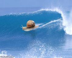 One big snail