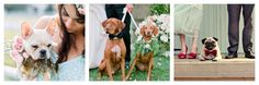 18 Dogs That Prove a Puppy Makes Your Wedding Pictures Infinitely Better