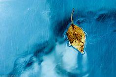 La Bionda e la poesia. http://www.stilefemminile.it/piovono-pensieri/