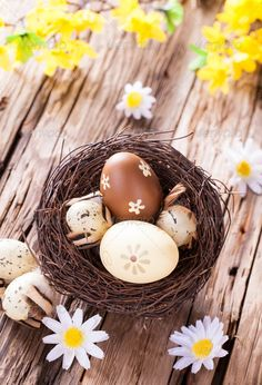 Easter eggs on wood ...  abundance, background, blossom, blue, board, brown, celebration, country, daisy, decoration, easter, eco, ecology, egg, flower, food, gap, holiday, joy, lifestyle, natural, nature, nest, old, plank, raw, religion, rough, rural, rustic, shell, space, splinter, spring, springtime, traditional, vertical, white, wood, wooden