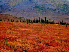 Durante el verano, el permafrost se derrite lo suficiente como para dejar que las plantas crecen y se reproducen, pero debido a que el suelo debajo de este se congela, el agua no puede caer más bajo, por lo que el agua forma los lagos y pantanos que se encuentran durante los meses de verano.