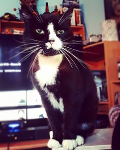 Best boy  . . . #bastithecat #cats #catsofinstagram #instacat #bestboy #whodoesntwakeyouupbypeeingonyou #2018isoftoaverynicestart