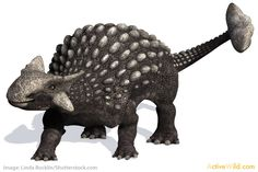 Cretaceous period dinosaurs list with pictures, information & facts. Discover the dinosaurs that lived in the Cretaceous Period. T Rex, Spinosaurus & more. Dinosaurs Names And Pictures, Names Of Dinosaurs, Dinosaur Pictures, Dinosaur Types, Dinosaur Art, English Creative Writing, Dinosaur Photo, Facts For Kids, Spinosaurus